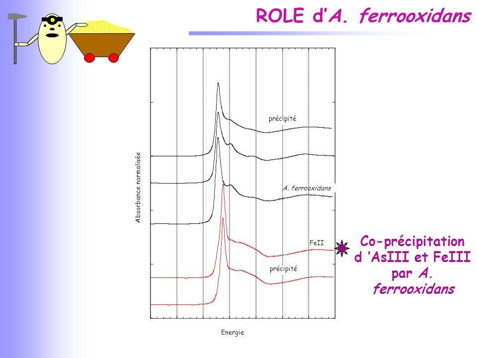 Co-précipitation d 'AsIII et FeIII par A. ferrooxidans