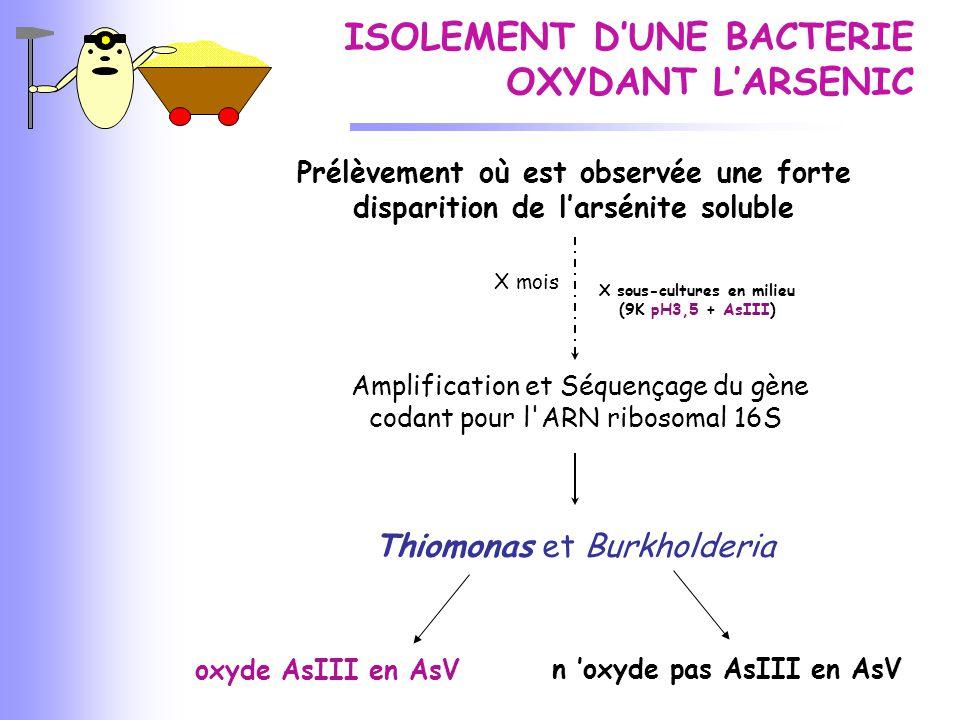 X sous-cultures en milieu (9K pH3,5 + AsIII) n 'oxyde pas AsIII en AsV