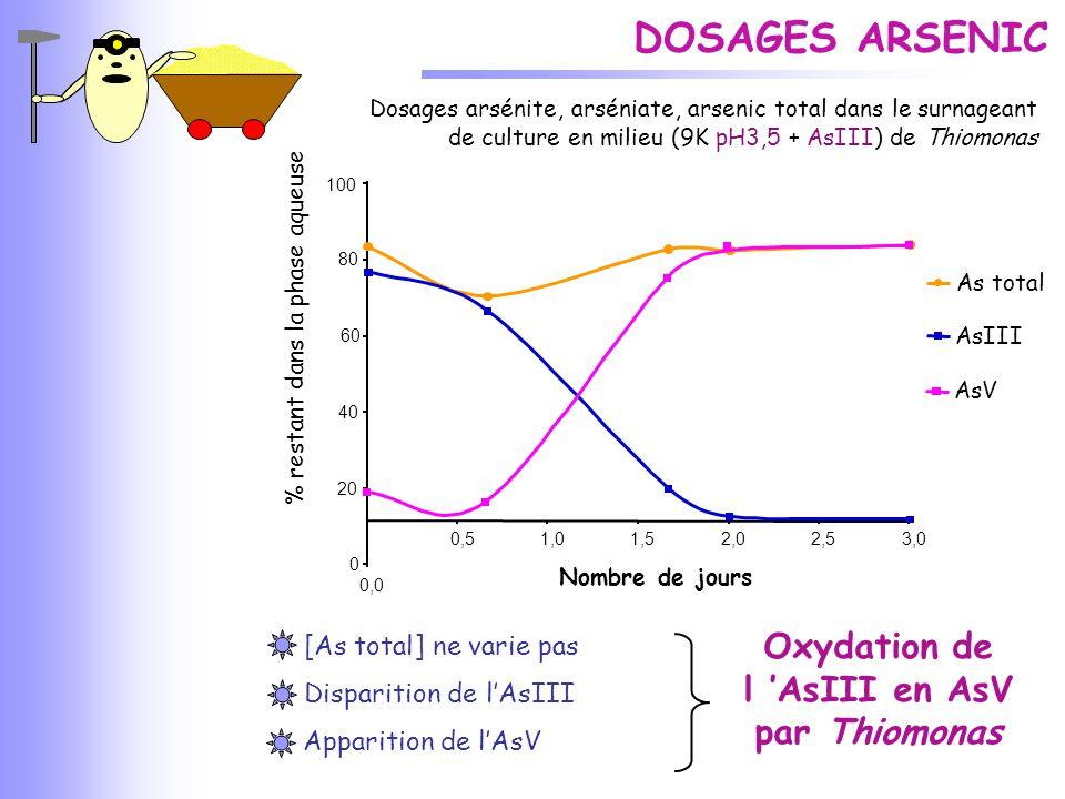 Oxydation de l 'AsIII en AsV par Thiomonas