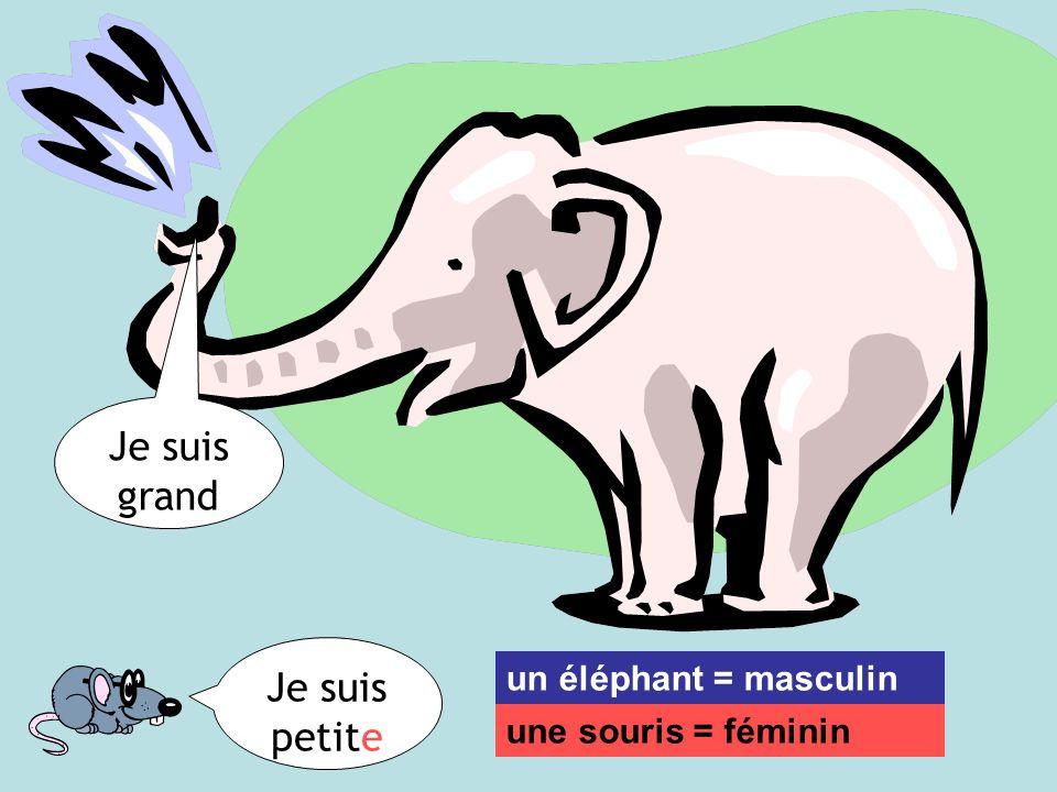 Je suis grand Je suis petite un éléphant = masculin