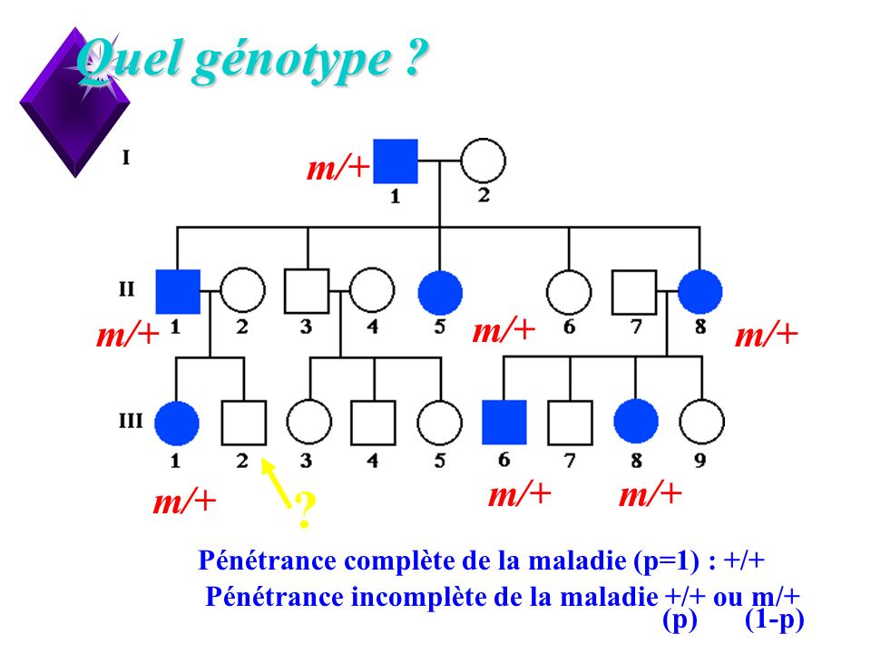 Quel génotype m/+ Pénétrance complète de la maladie (p=1) : +/+