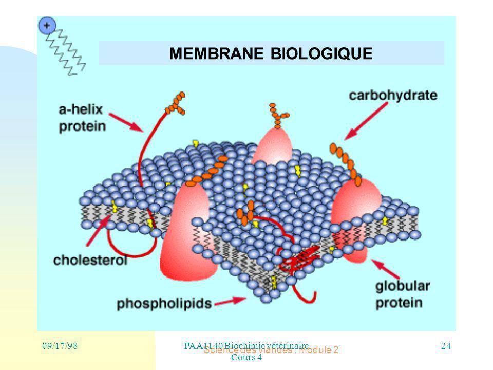 MEMBRANE BIOLOGIQUE 09/17/98 PAA1140 Biochimie vétérinaire Cours 4