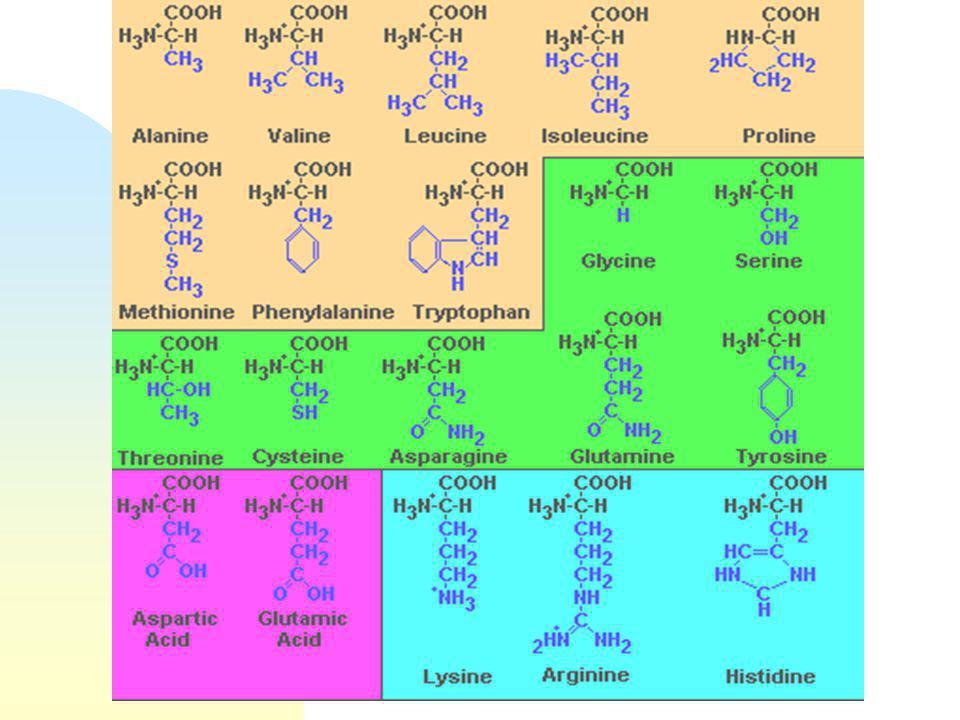 Science des viandes : Module 2