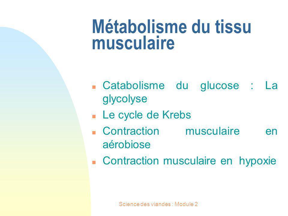 Métabolisme du tissu musculaire