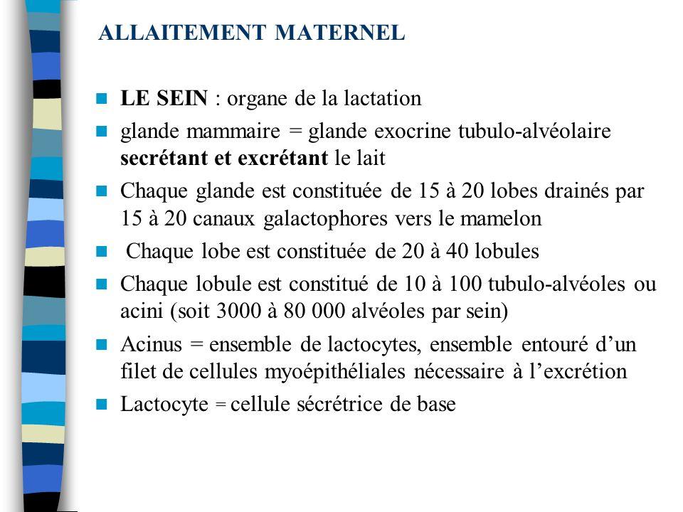 ALLAITEMENT MATERNEL LE SEIN : organe de la lactation. glande mammaire = glande exocrine tubulo-alvéolaire secrétant et excrétant le lait.