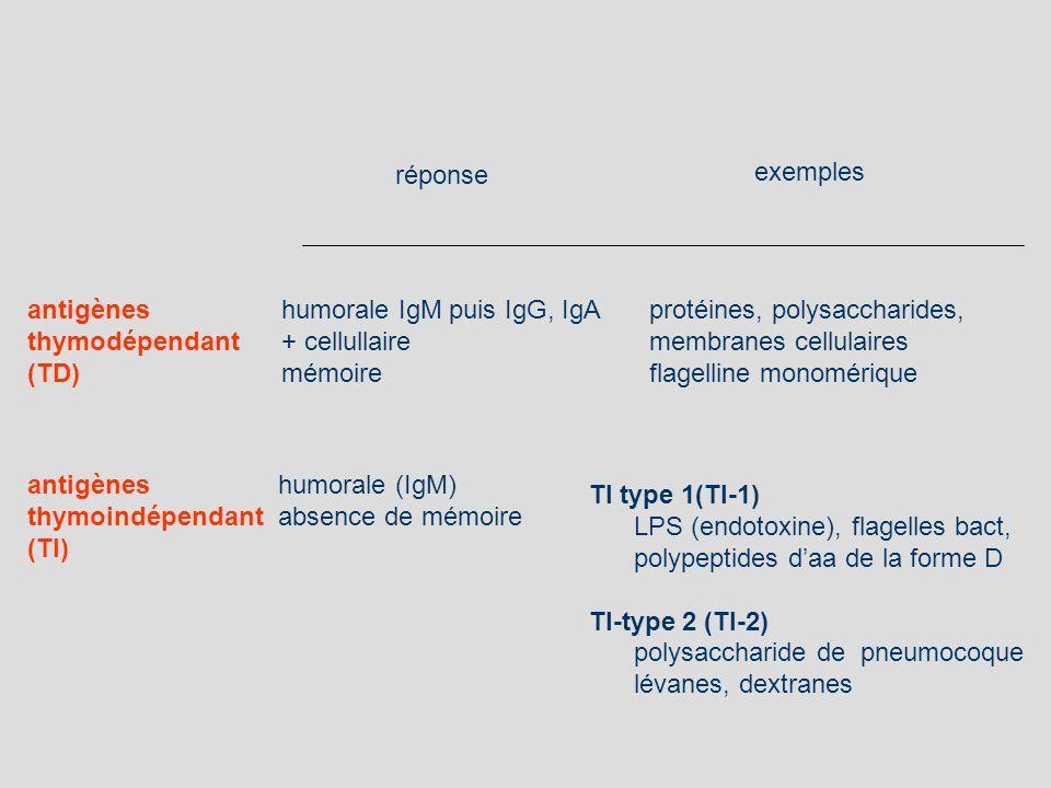 humorale IgM puis IgG, IgA + cellullaire mémoire