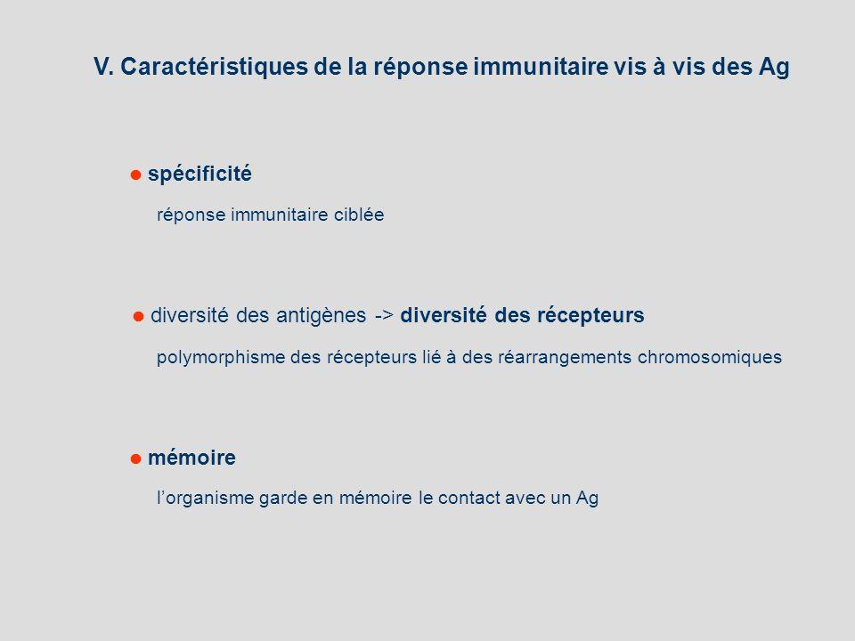 V. Caractéristiques de la réponse immunitaire vis à vis des Ag