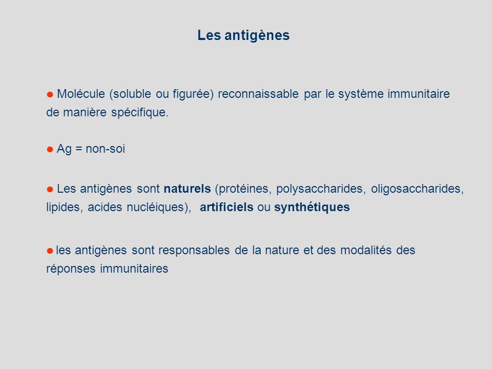 Les antigènes de manière spécifique.