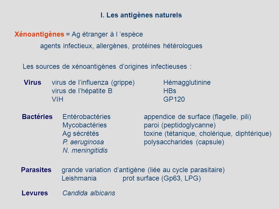 I. Les antigènes naturels