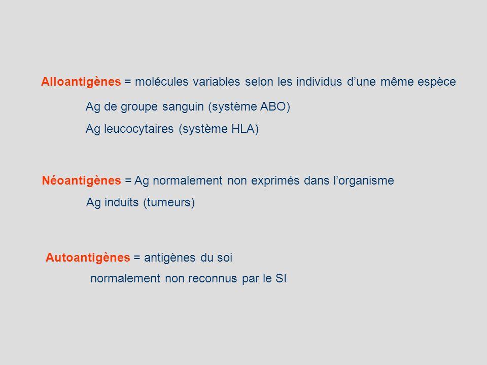 Alloantigènes = molécules variables selon les individus d'une même espèce