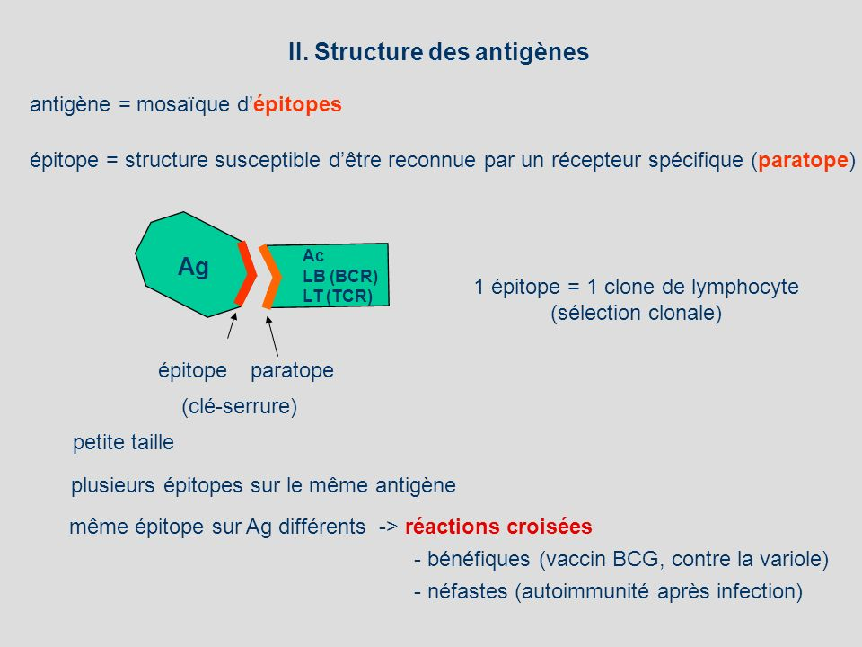 1 épitope = 1 clone de lymphocyte