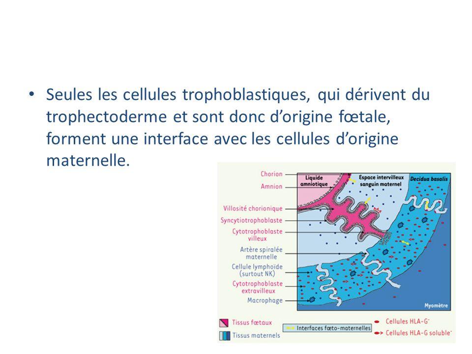 Seules les cellules trophoblastiques, qui dérivent du trophectoderme et sont donc d'origine fœtale, forment une interface avec les cellules d'origine maternelle.