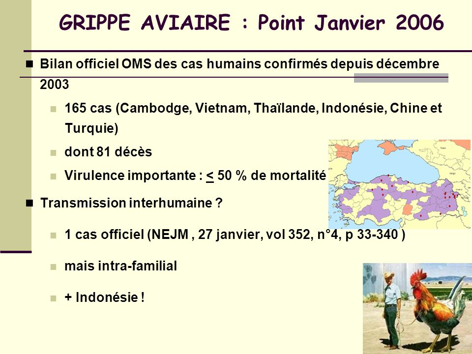 GRIPPE AVIAIRE : Point Janvier 2006