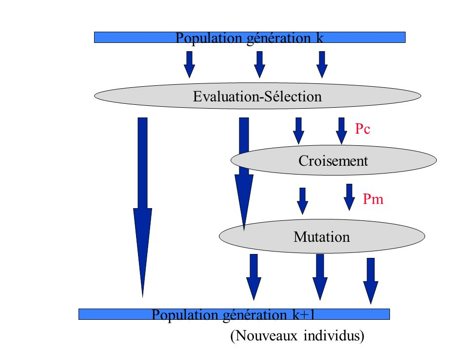 Population génération k
