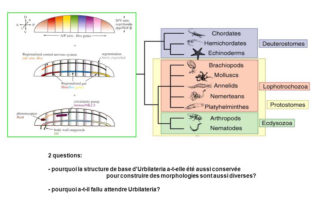 2 questions: - pourquoi la structure de base d Urbilateria a-t-elle été aussi conservée. pour construire des morphologies sont aussi diverses