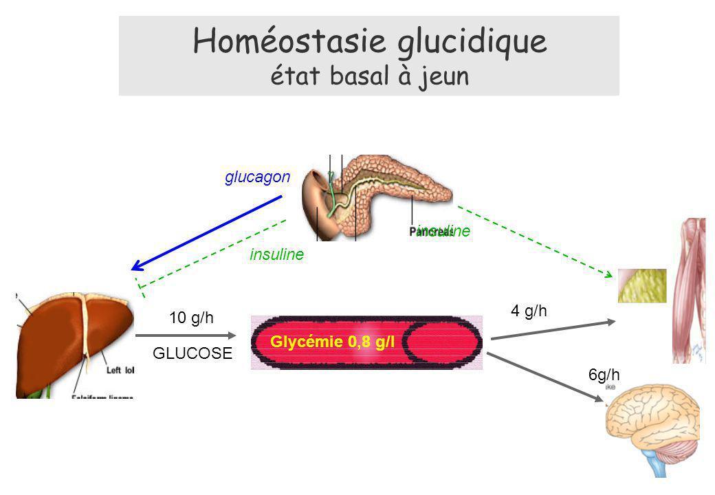 Homéostasie glucidique état basal à jeun