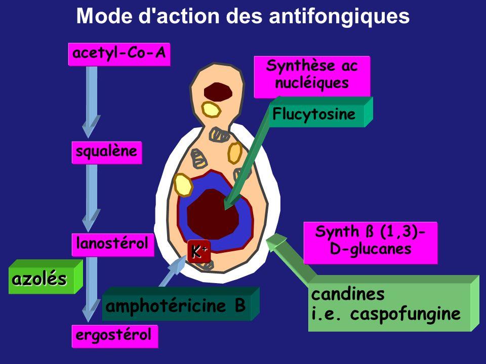 Mode d action des antifongiques Synthèse ac nucléiques