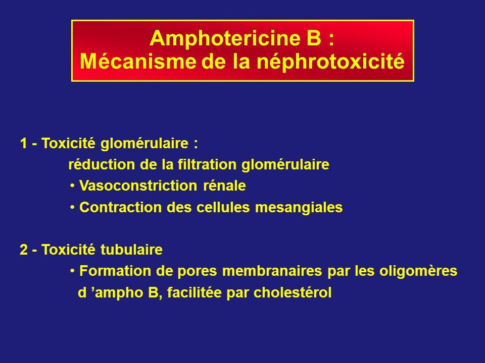 Mécanisme de la néphrotoxicité