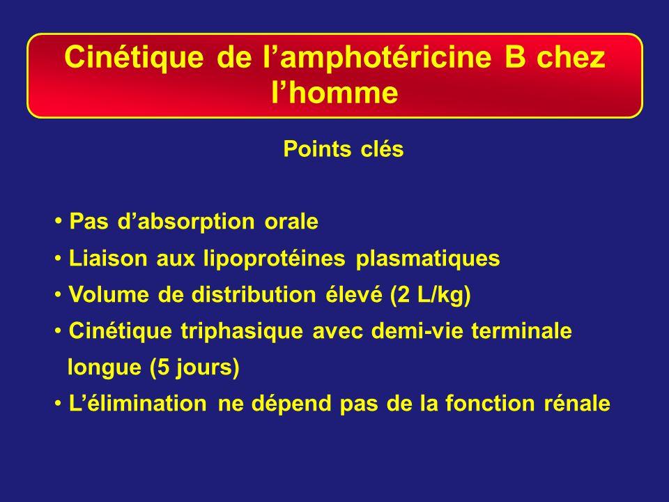 Cinétique de l'amphotéricine B chez l'homme
