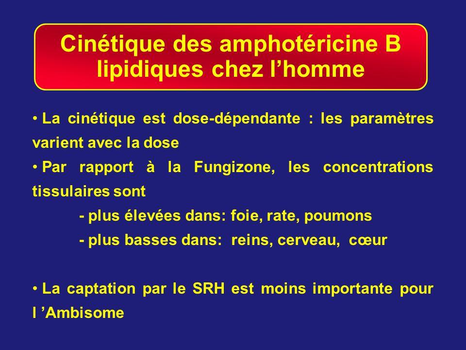 Cinétique des amphotéricine B lipidiques chez l'homme
