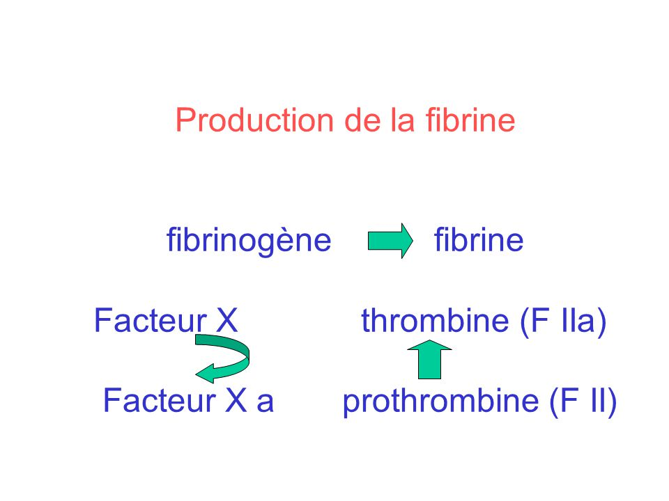 Production de la fibrine. fibrinogène. fibrine Facteur X