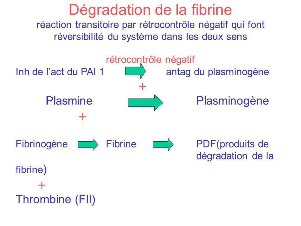Dégradation de la fibrine réaction transitoire par rétrocontrôle négatif qui font réversibilité du système dans les deux sens