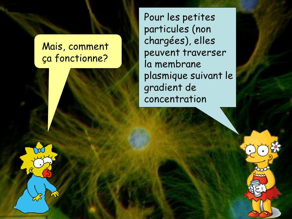 Pour les petites particules (non chargées), elles peuvent traverser la membrane plasmique suivant le gradient de concentration