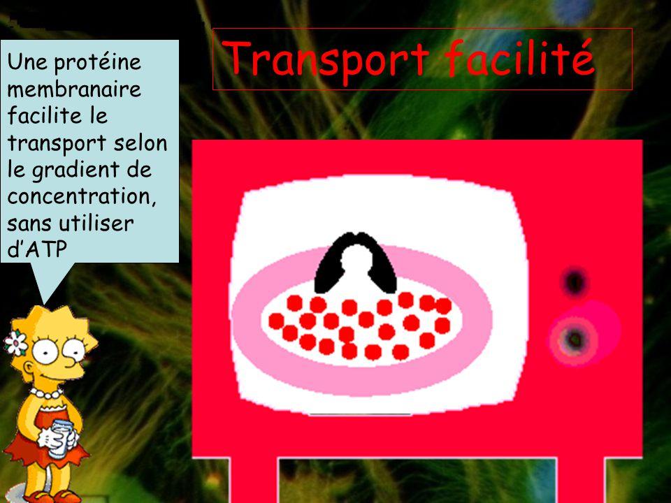 Transport facilité Une protéine membranaire facilite le transport selon le gradient de concentration, sans utiliser d'ATP.