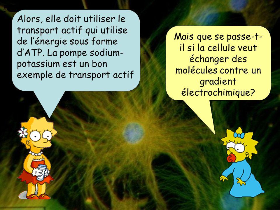 Alors, elle doit utiliser le transport actif qui utilise de l'énergie sous forme d'ATP. La pompe sodium-potassium est un bon exemple de transport actif