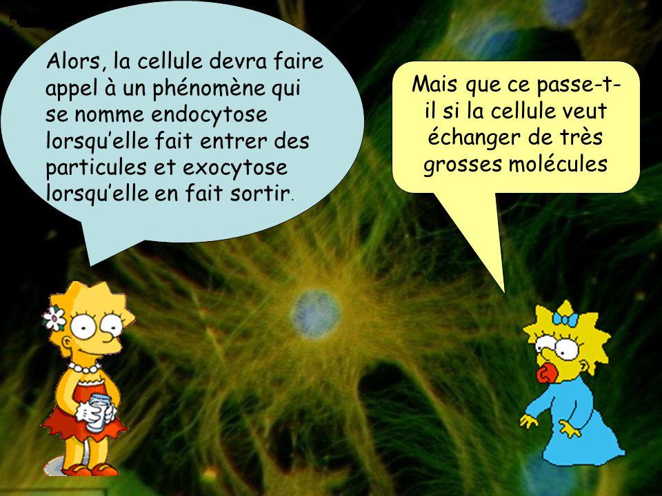 Alors, la cellule devra faire appel à un phénomène qui se nomme endocytose lorsqu'elle fait entrer des particules et exocytose lorsqu'elle en fait sortir.