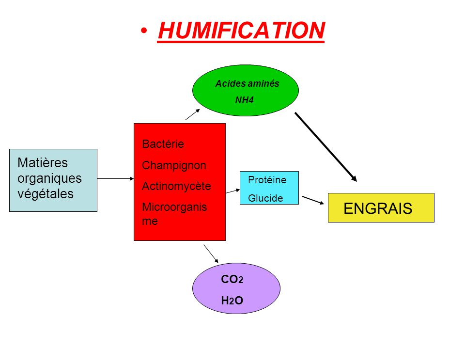 HUMIFICATION ENGRAIS Matières organiques végétales Bactérie Champignon