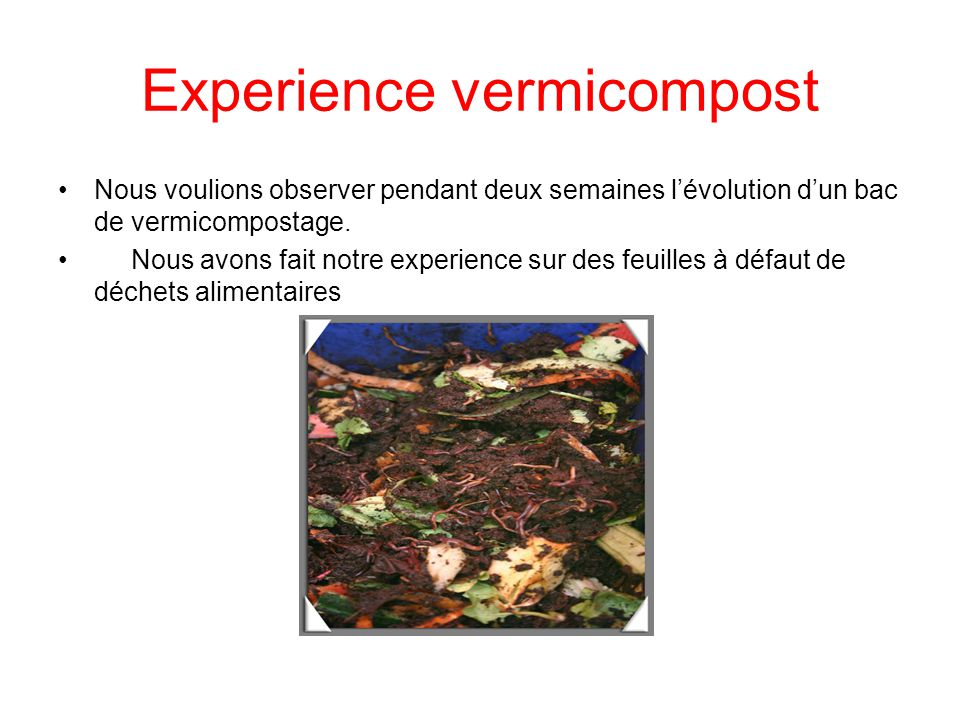 Experience vermicompost