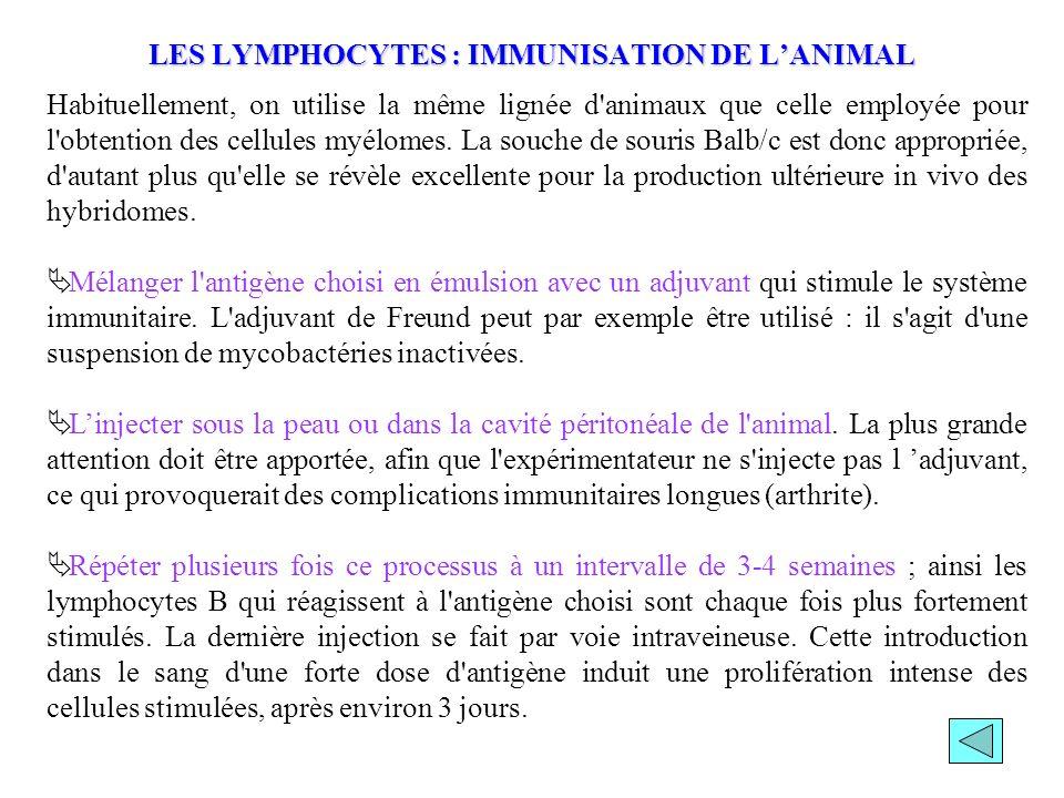 LES LYMPHOCYTES : IMMUNISATION DE L'ANIMAL