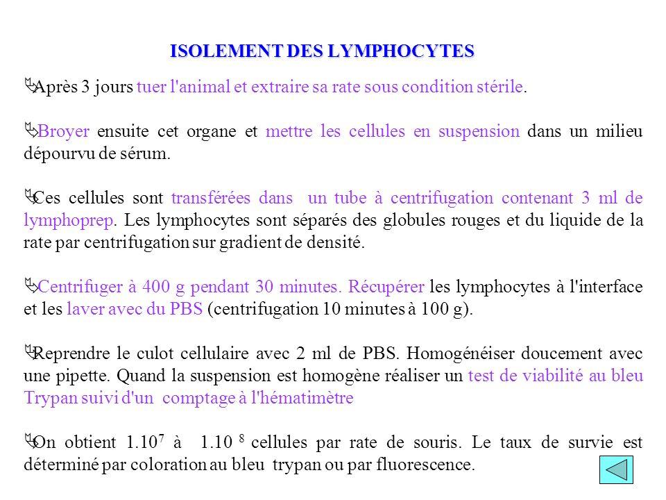 ISOLEMENT DES LYMPHOCYTES