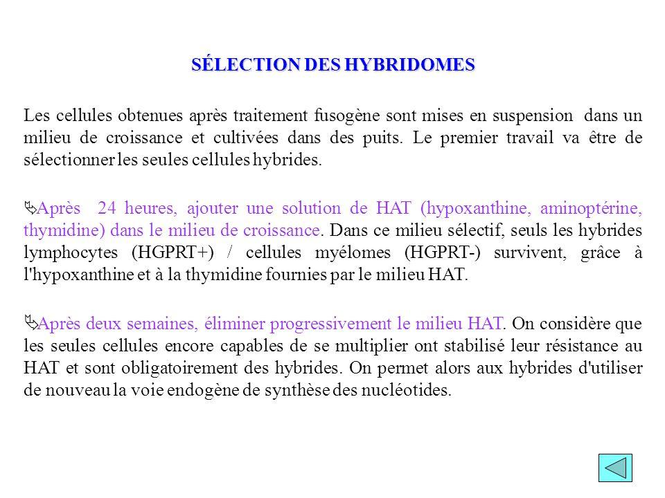SÉLECTION DES HYBRIDOMES