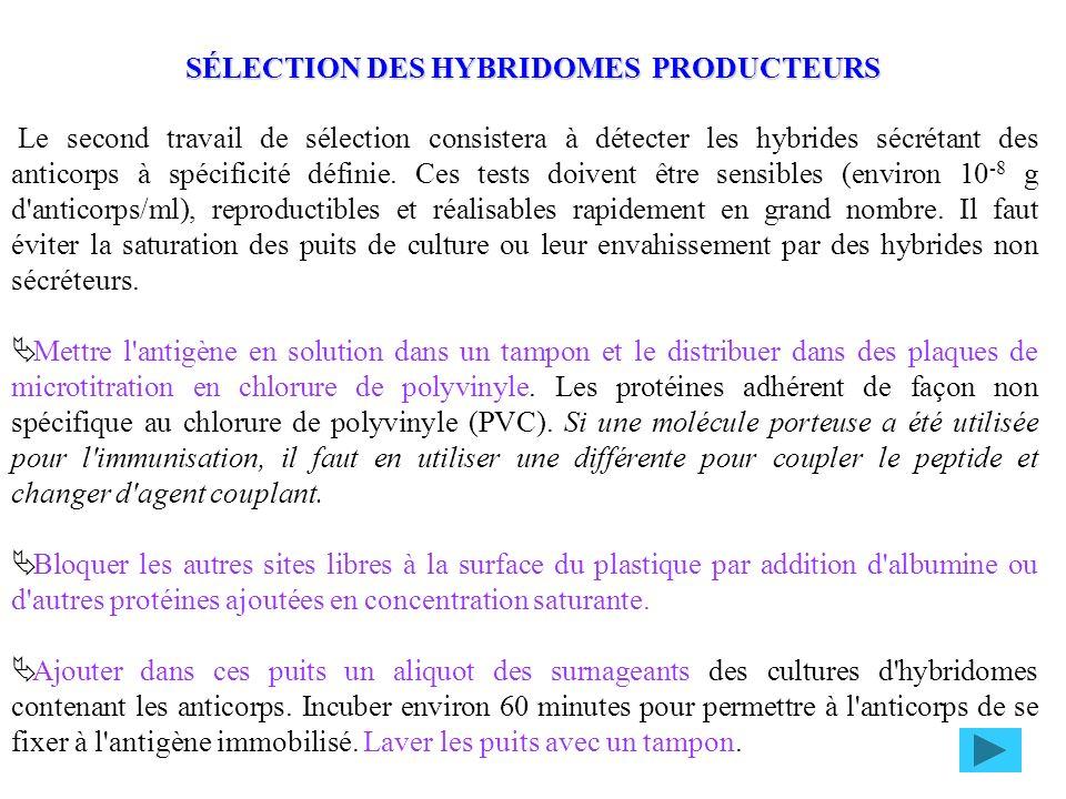 SÉLECTION DES HYBRIDOMES PRODUCTEURS