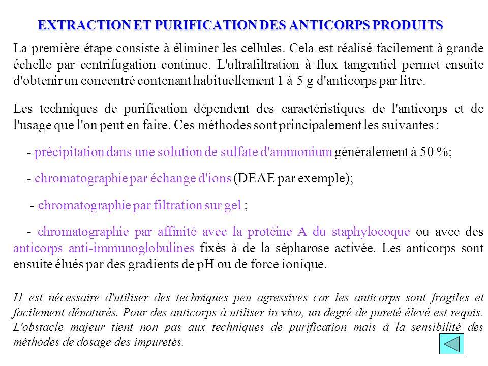 EXTRACTION ET PURIFICATION DES ANTICORPS PRODUITS