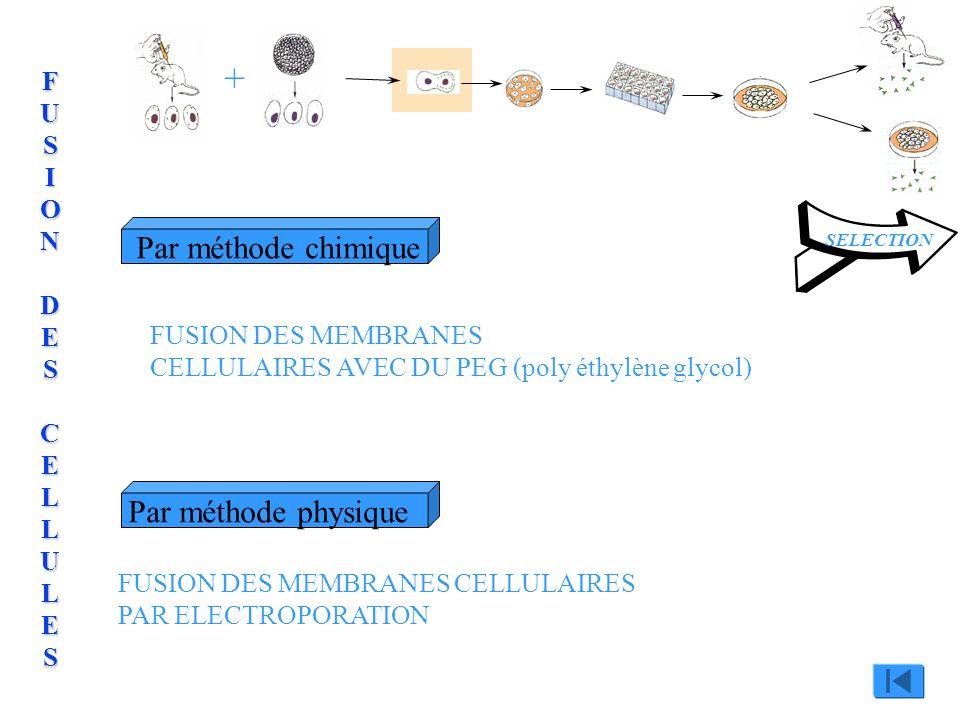 + Par méthode chimique Par méthode physique FUSION DES CELLULES