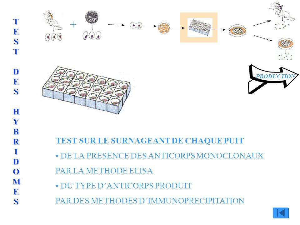 + TEST DES HYBRIDOMES TEST SUR LE SURNAGEANT DE CHAQUE PUIT