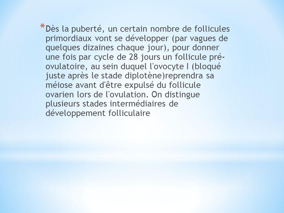 Dès la puberté, un certain nombre de follicules primordiaux vont se développer (par vagues de quelques dizaines chaque jour), pour donner une fois par cycle de 28 jours un follicule pré- ovulatoire, au sein duquel l ovocyte I (bloqué juste après le stade diplotène)reprendra sa méiose avant d être expulsé du follicule ovarien lors de l ovulation.