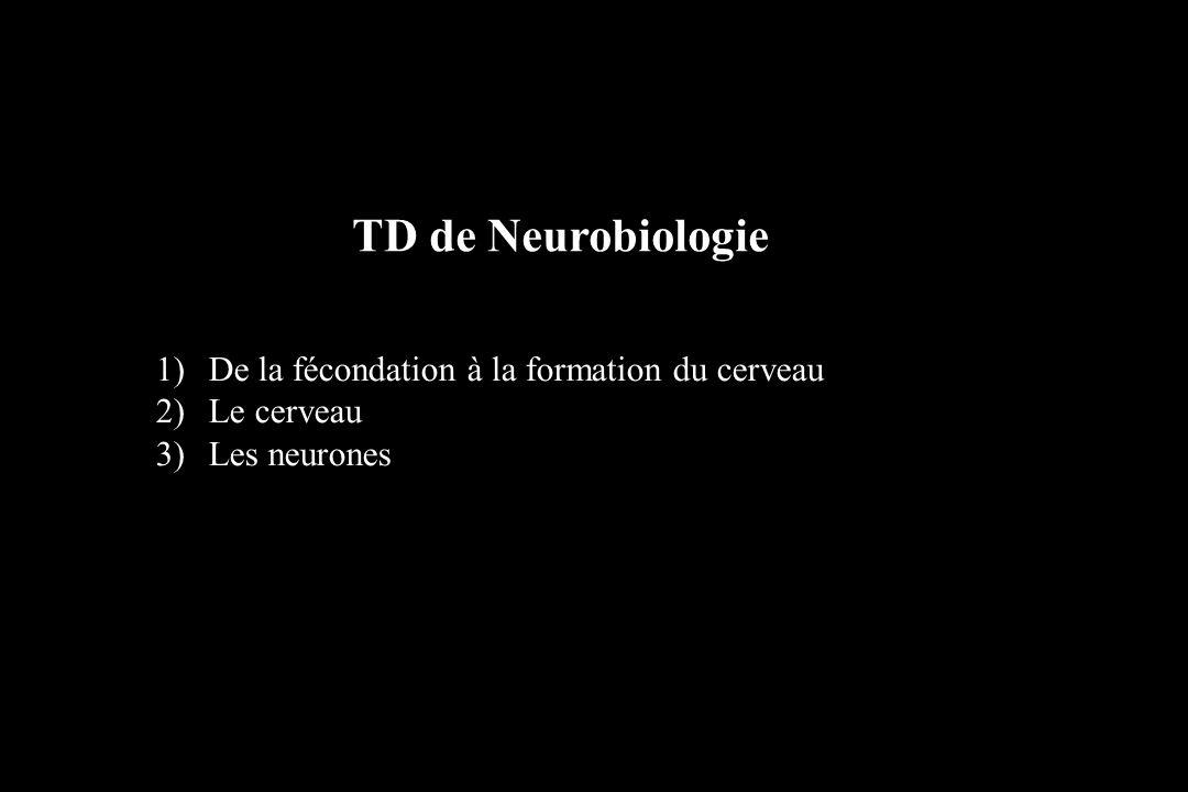 TD de Neurobiologie De la fécondation à la formation du cerveau
