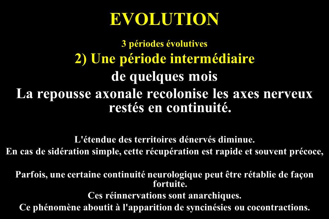 EVOLUTION 2) Une période intermédiaire de quelques mois