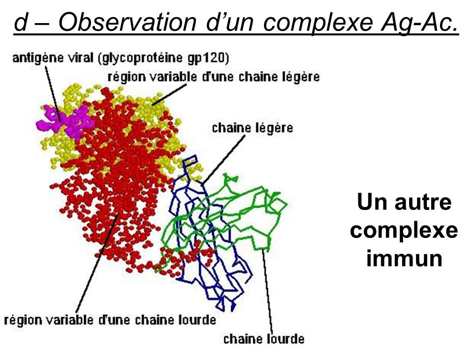 Un autre complexe immun