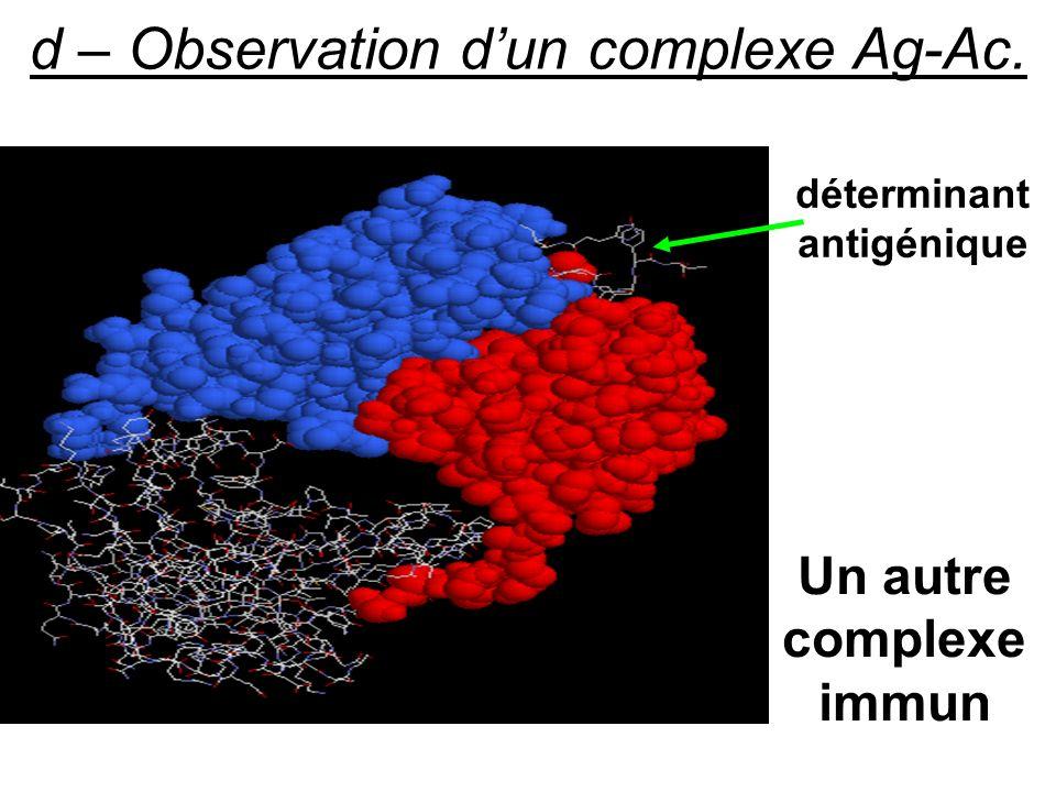 déterminant antigénique Un autre complexe immun