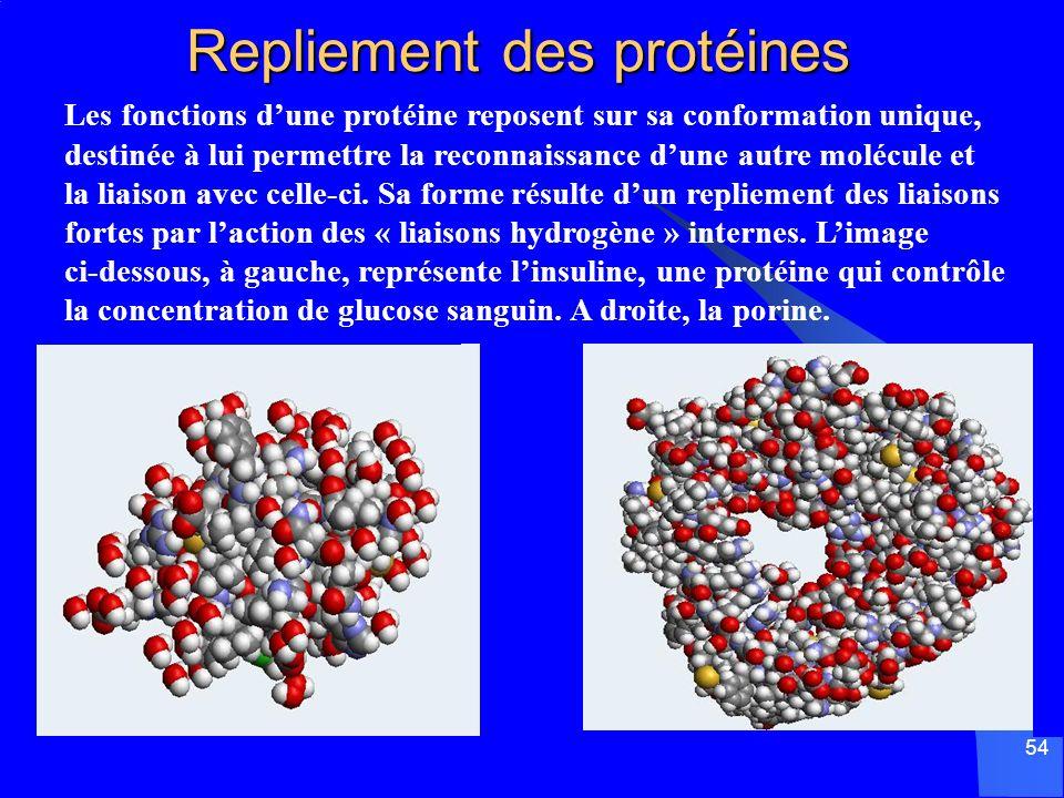 Repliement des protéines