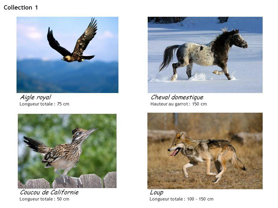 Collection 1 Aigle royal Cheval domestique Coucou de Californie Loup