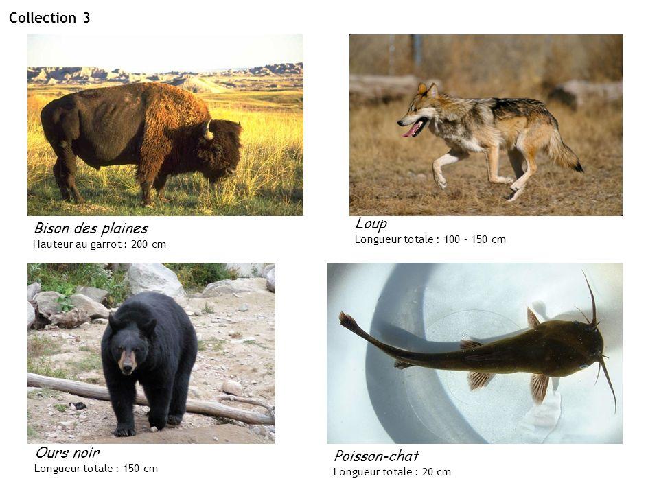 Collection 3 Loup Bison des plaines Ours noir Poisson-chat