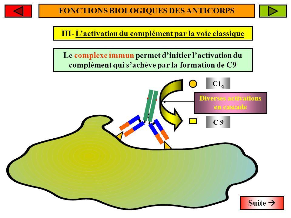 FONCTIONS BIOLOGIQUES DES ANTICORPS