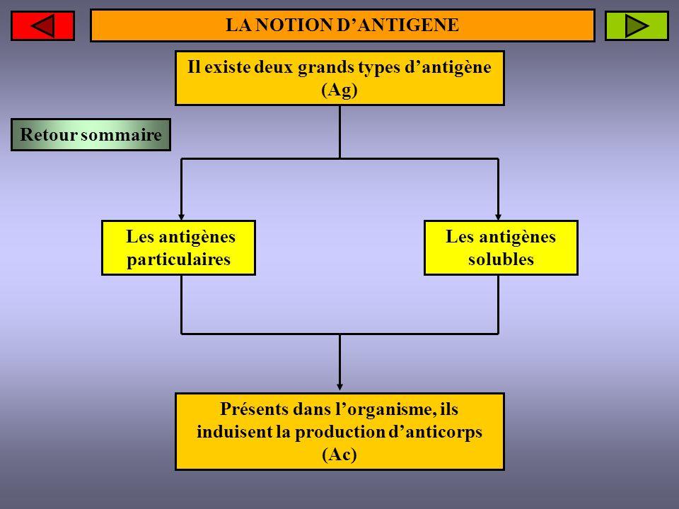 Il existe deux grands types d'antigène (Ag)