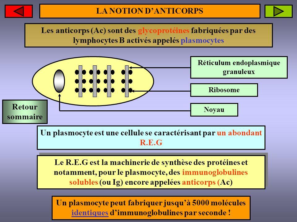 Réticulum endoplasmique granuleux